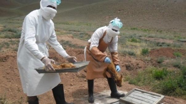 На границе с Россией зарегистрирован еще один случай заражения бубонной чумой