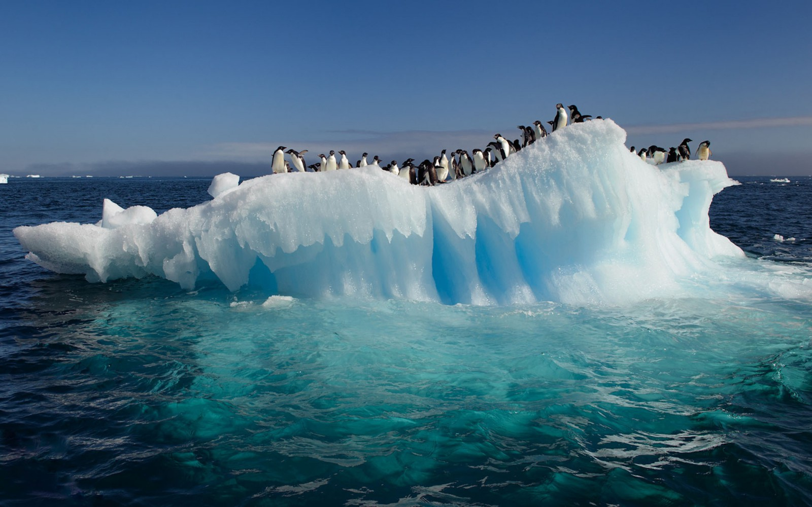 Озеро Lake CECs даст ответ, есть ли жизнь в арктических льдах