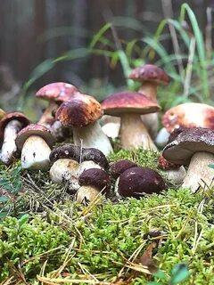 В Петербурге закончился сезон грибов