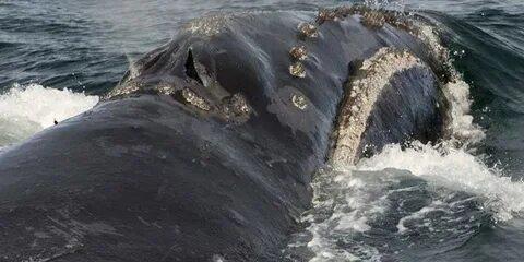 Ученые обнаружили редких загадочных китов в водах Аляски